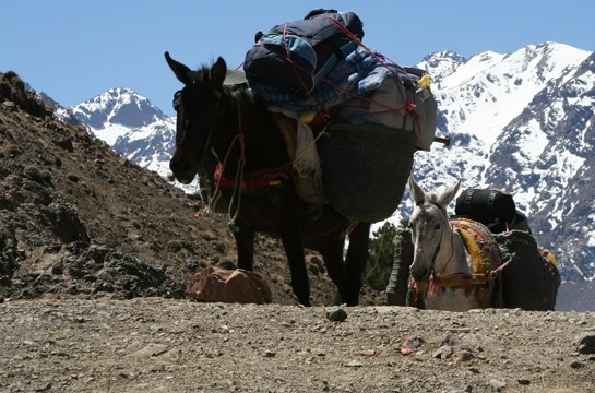 Toubkal Ascent In 7 days